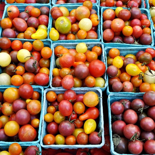 Tomatoes @ Union Square Greenmarket