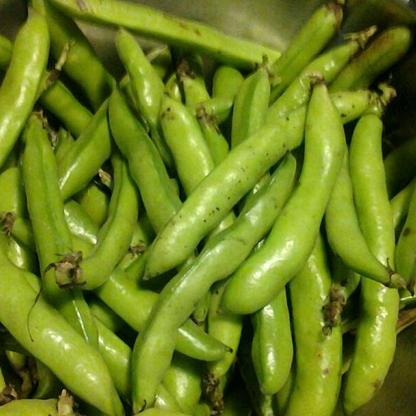 Fresh english peas - The Village Cork, Denver, CO