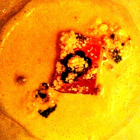 Sunchoke Soup, Pork Belly, Hazelnut Brown Butter Powder - Kimball's Kitchen, Duck, NC