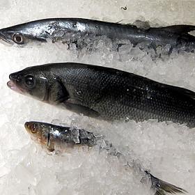 Fish - Black Olive, Baltimore, MD