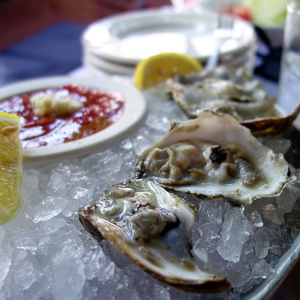 Oysters on the Half Shell - Gibsons Bar & Steakhouse - Chicago, Chicago, IL