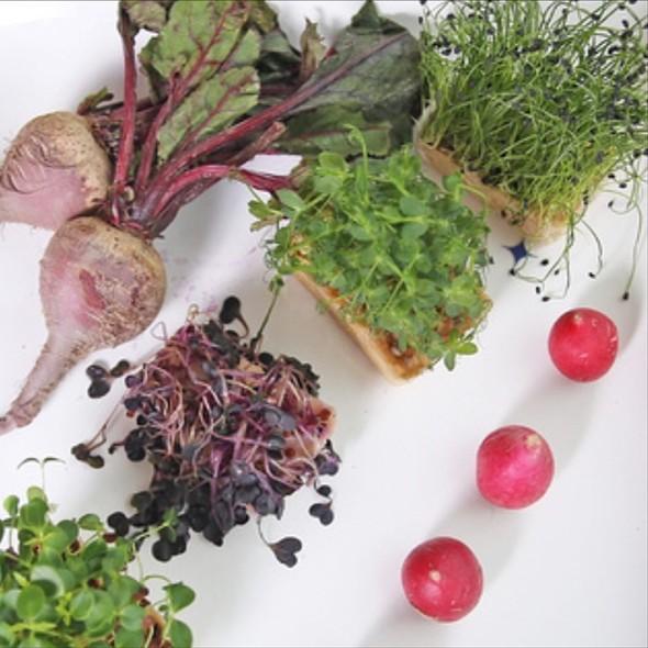 Local Garden Fresh Daily - Vidalia Restaurant - Lawrenceville, NJ, Lawrenceville, NJ